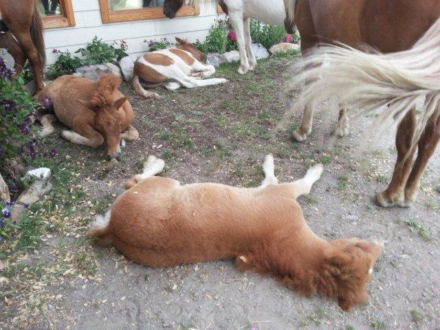 foals napping on a hot afternoon